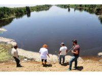Ölü balıklar kilometre uzunluğundaki nehre yayıldı
