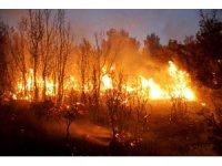 Seydikemer'de orman yangını: 20 hektar alan yandı