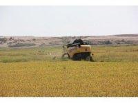 Edirne'de hububat hasadı fiyatları açıklandı