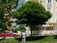 Şahinbey'de Parklar İlaçlanıyor