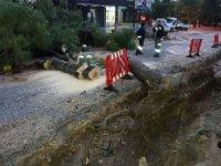 Muğla'da yağmur, su baskınlarına sebep oldu