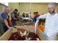 Trabzon'dan Uzakdoğu'ya somon ihracı