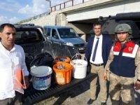 Edremit'te 1,5 ton kaçak avlanmış inci kefali ele geçirildi