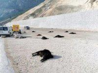 Karaman'da katkı maddesi içen 22 küçükbaş hayvan telef oldu