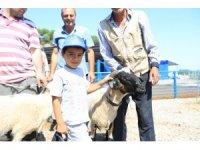 Büyükşehir hayvancılığı desteklemeye devam ediyor