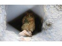 'Balık Baykuşu' Mersin'de koruma altına alındı