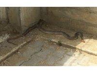Vatandaşların evlerine giren yılanlar tek tek yakalandı