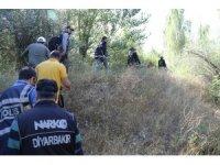 Diyarbakır'da 2 bin 675 kök kenevir ele geçirildi