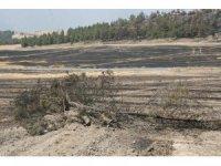 Denizli'de yanan 69 hektarlık alana 100 bin fidan dikilecek