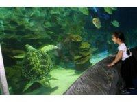 Avrupa akvaryumlarındaki en büyük deniz kaplumbağalarından Iggy İstanbul'da