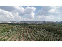 """Bakan Eroğlu: """"Başkente önemli bir yeşil alan kazandırdık"""""""