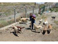 Vaktinin çoğunu sadık dostları sokak köpeklerine adadı