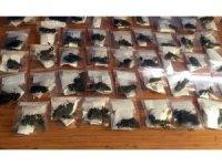 Samsun'da satışa hazır halde 43 paket esrar maddesi ele geçirildi