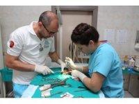 Bacağı kırılan kediler sağlığına kavuşacak