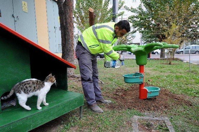 Karşıyaka'da Sokak Hayvanları Yuvalarına Kavuştu