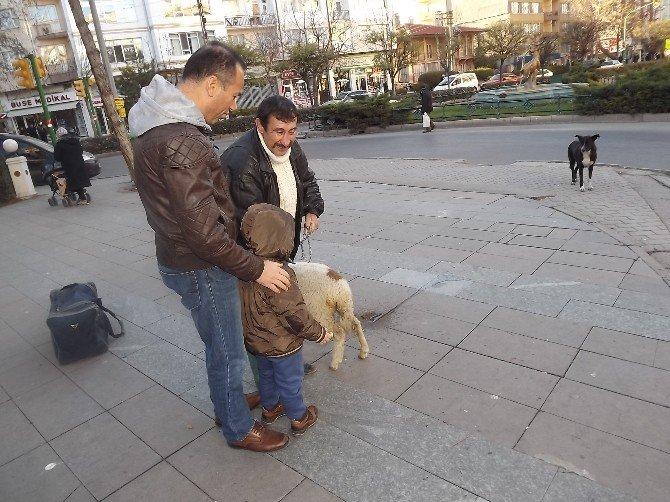 Şehir Köpekleri Kuzuyu Köpek Sanınca