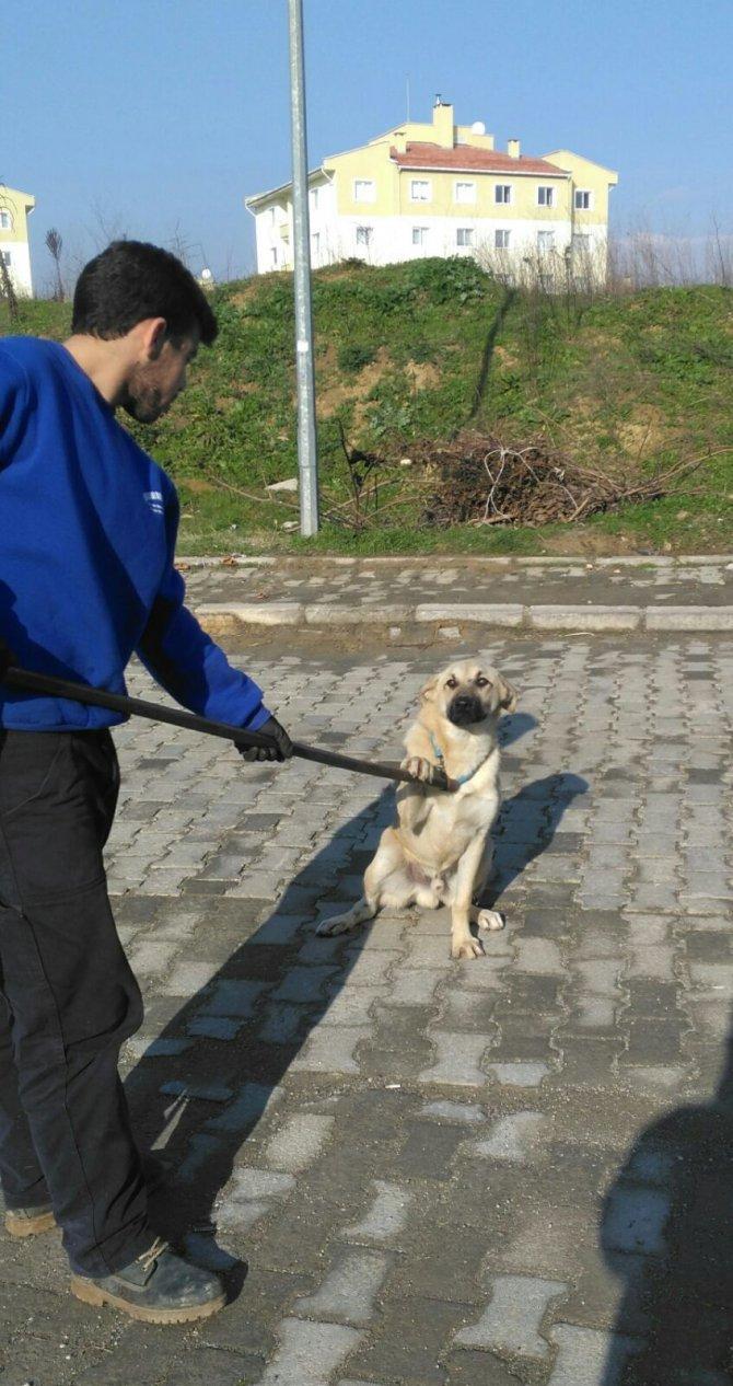 3 bin sokak köpeğinden sadece 16'su sahip buldu