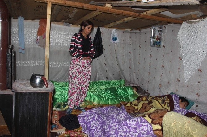 Suriyeli Değil Aydınlı Ailenin Naylon Çadırda Dram Dolu Yaşam Mücadelesi