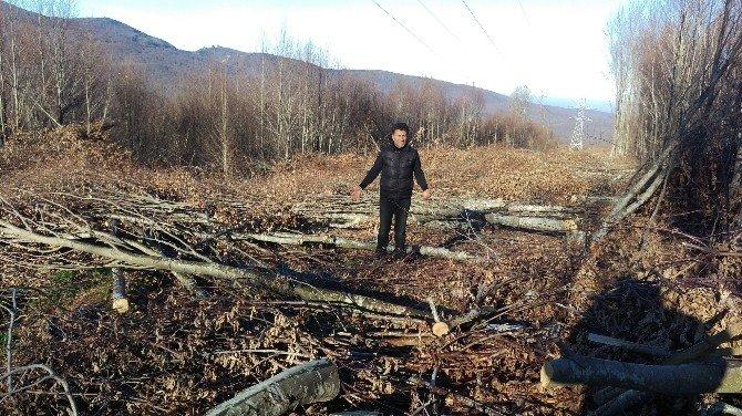 Rüzar Santrali İçin Ağaç Katliamı