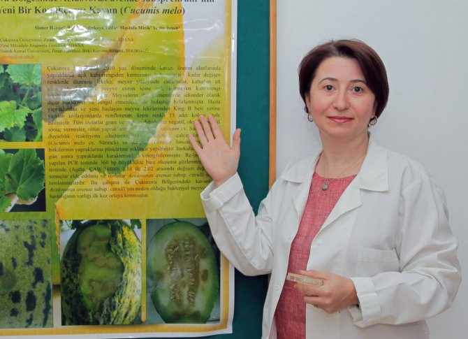 İthal fidelerle Türkiye'ye yeni hastalıklar geliyor