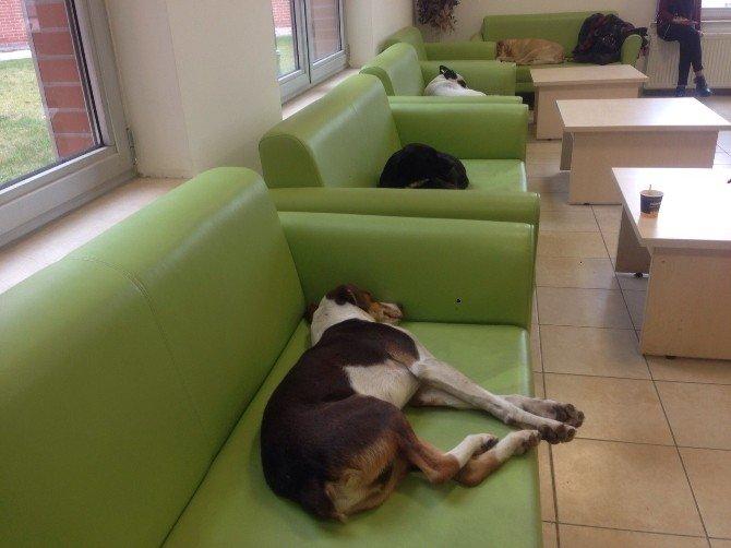 Her Köpeğe Bir Kanepe Projesi