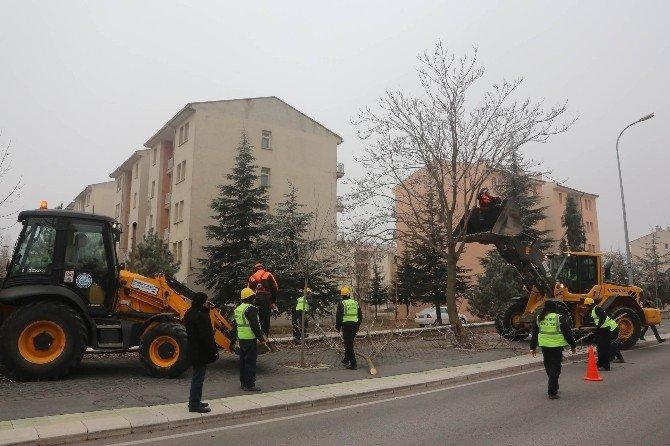 Ana Caddelerdeki Ağaçlar Budanıyor