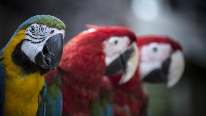 Tropikal Kelebek Bahçesi'ni 5 ayda 177 bin 429 kişi ziyaret etti
