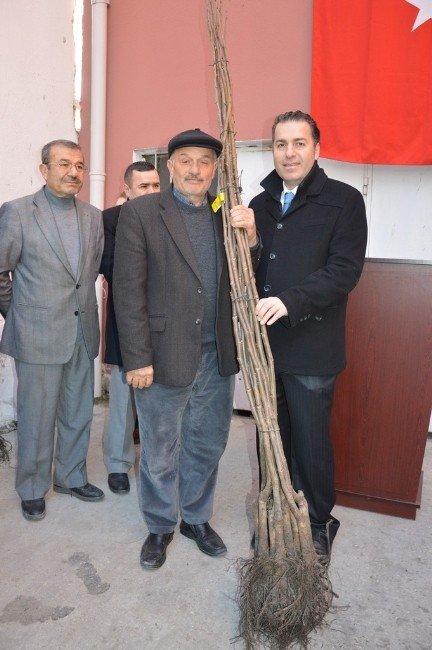 Niksar'da 4 Bin 530 Adet Ceviz Fidanı Dağıtıldı