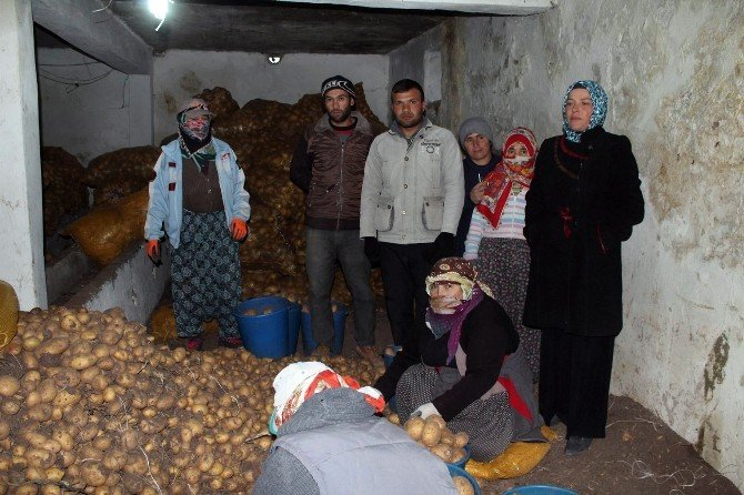 Sivas'ta Patates Üreticileri Dolandırıcılardan Dertli