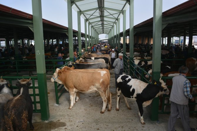 Hayvan pazarı şap riskinden kapatıldı