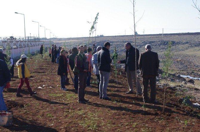 Viranşehir'de Ağaç Dikme Kampanyası Başlatıldı