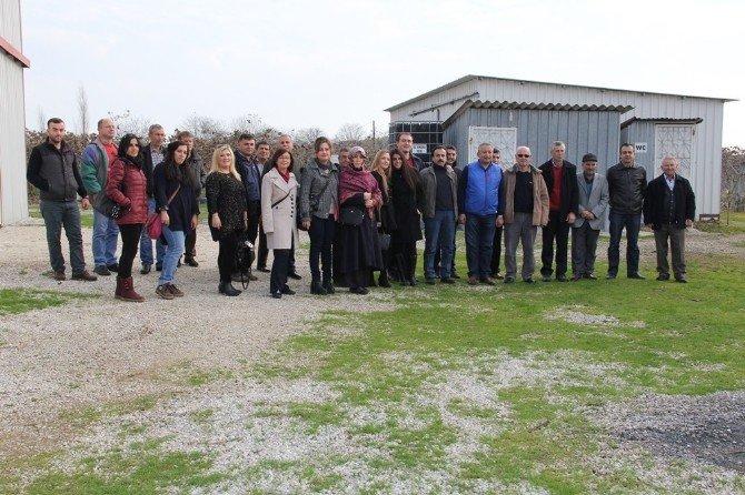 Yalovalı Çiftçiler Bursa'daki Kivi Bahçelerini Gezdi