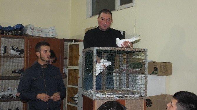 Burhaniye'de Güvercin Mezadı