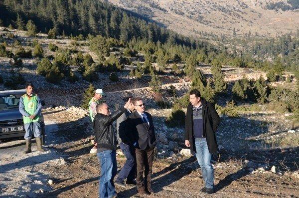 Mersin'in Bal Ormanları Artıyor