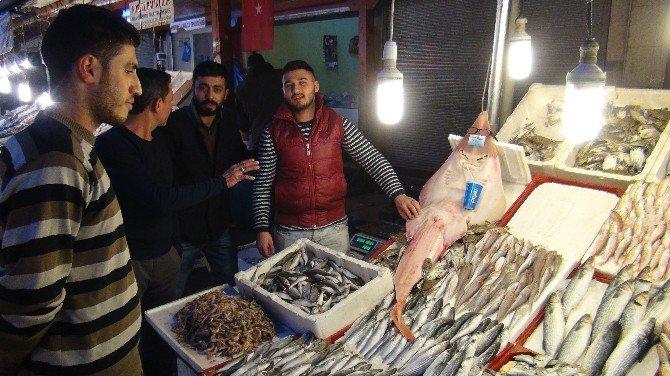 İnsan Görünümlü Balık İlgi Görüyor