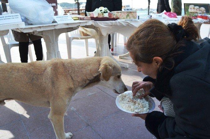 Sokak Hayvanlarına Mama Bağışı İçin Kermes Düzenlediler