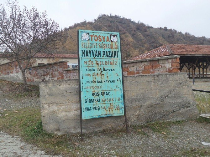 Tosya Hayvan Pazarı, Şap Hastalığı Nedeniyle Karantinaya Alındı
