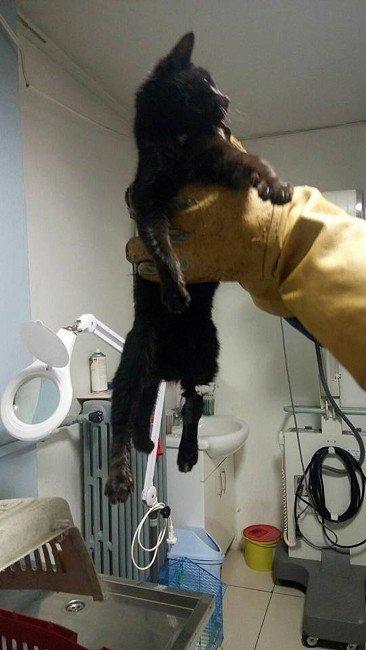 Hayvan Severlerin Minik Kediyi Kurtarma Çabası