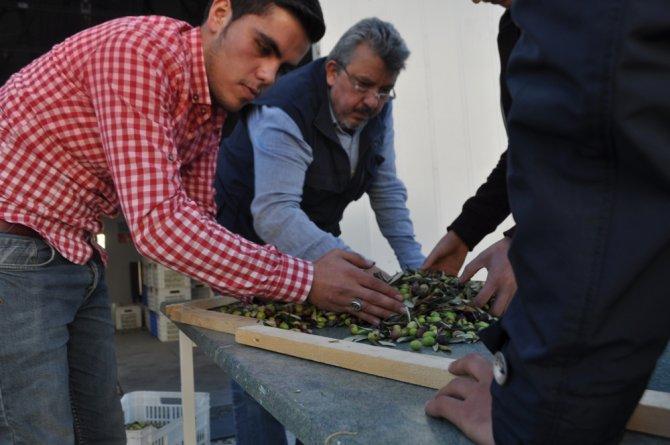 Edremit Meslek Yüksekokulu'nda ilk zeytinyağı sıkımı yapıldı