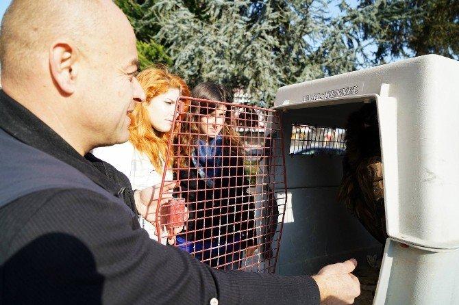Kara Akbabalar Tedavi İçin Bursa'da