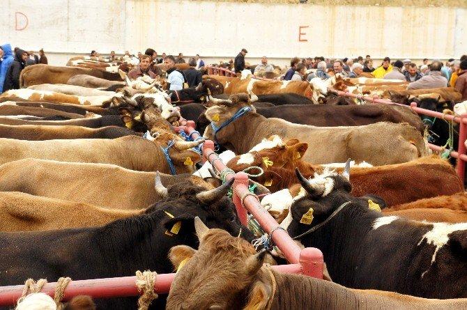 Kastamonu'da Hayvan Pazarları Kapatıldı