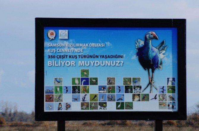 Kuş Cennetinde Yarışıyorlar