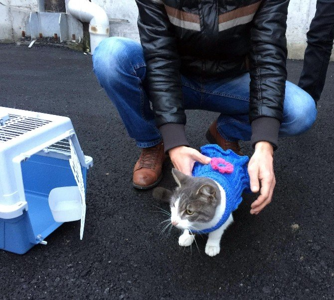 Üsküdar'da Sokak Hayvanları Artık Üşümeyecek