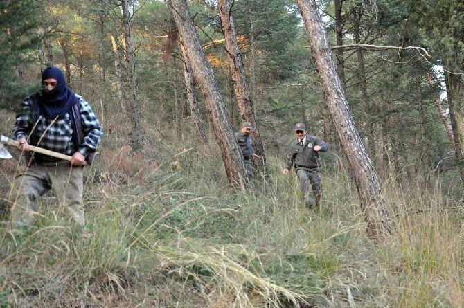Orman Memurları Çam Nöbetinde