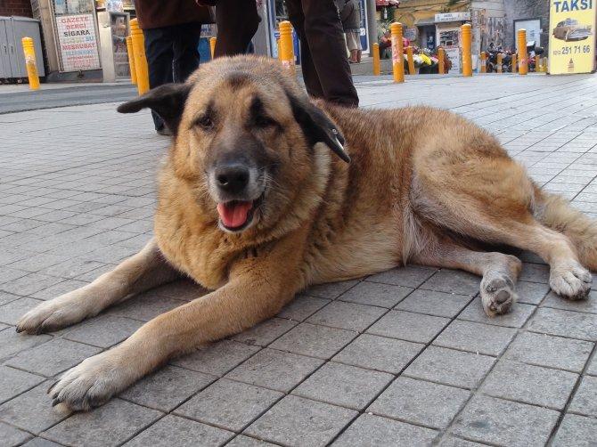 Gezi eylemlerinin simgesi Eylem köpek ortaya çıktı