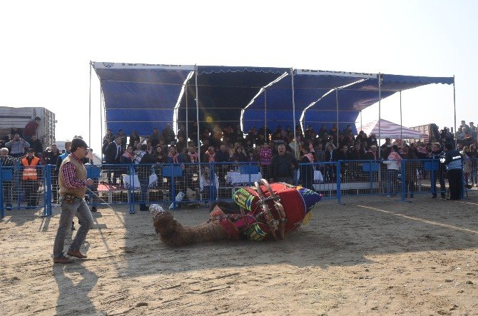 Buharkent Güreşi Festivale Dönüştü