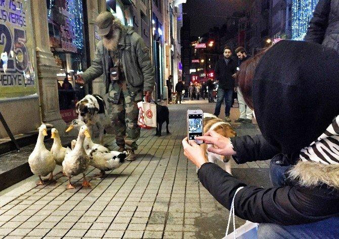 İstiklal Caddesinde Ördek Sürüsüyle Gezdi