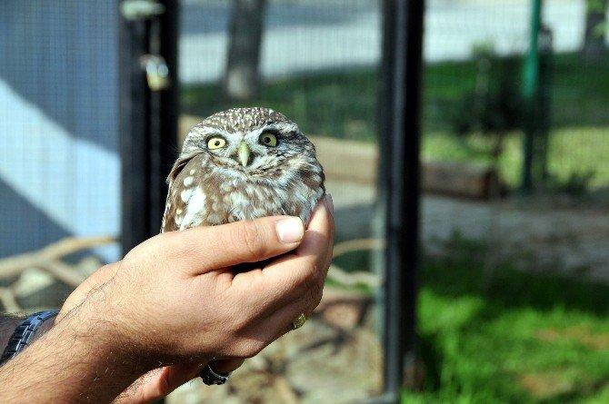 Tedavi Edilen Kuşlar Doğaya Uğurlandı