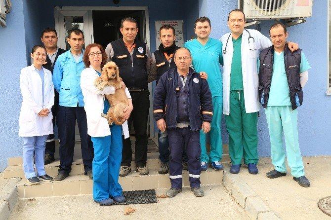Denizli'de Sahipsiz Hayvanlar, Klinikte Tedavi Ediliyor