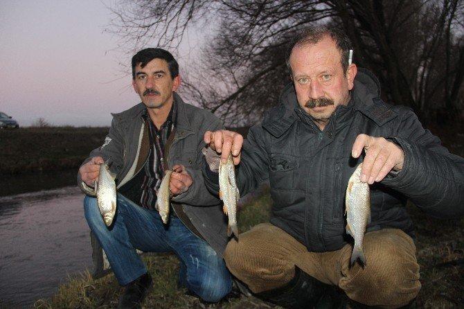 Porsuk Çayı'nda Toplu Balık Ölümleri